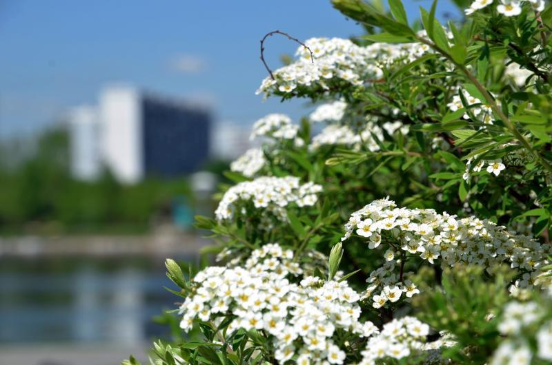 Лето близко: последние майские выходные порадуют жителей Новой Москвы интересными событиями