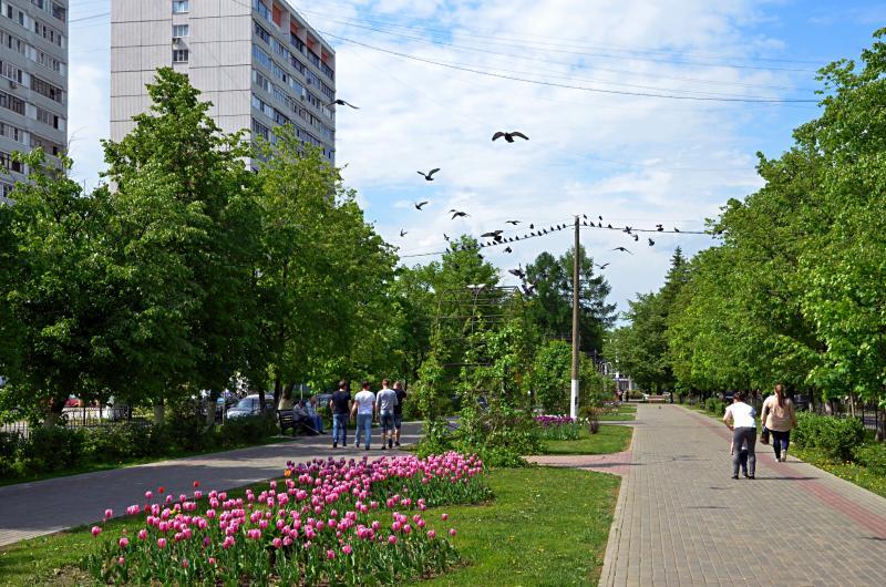 В поселении Марушкинское проводят ежегодные работы по озеленению. Фото: архив