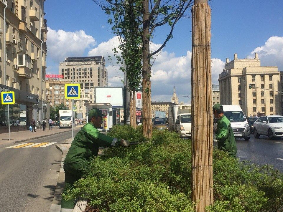 Растения в центре столицы привели в порядок