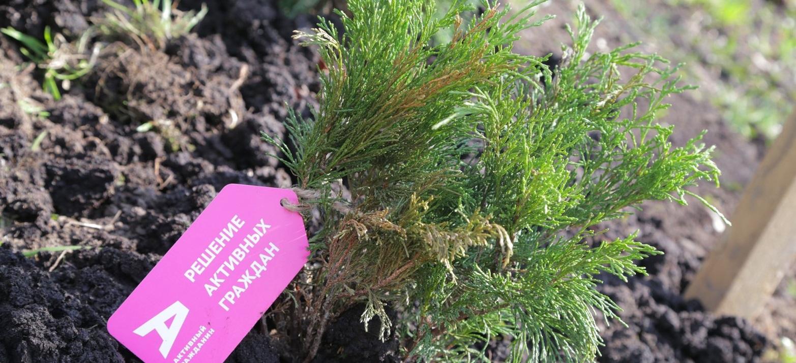 Активные граждане выберут места для посадки деревьев