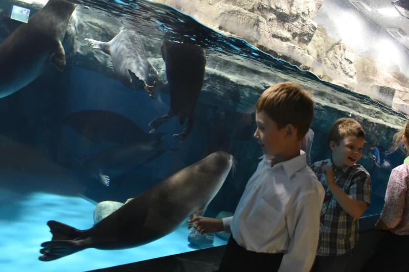 Дети из Щаповского посетят океанариум