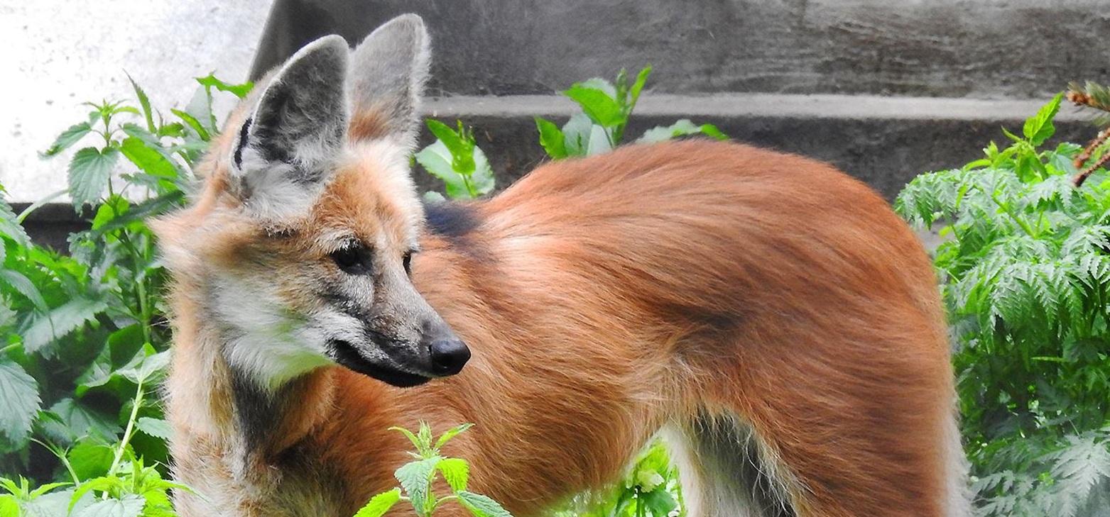 В Московском зоопарке появятся редкие краснокнижные животные. Фото: mos.ru