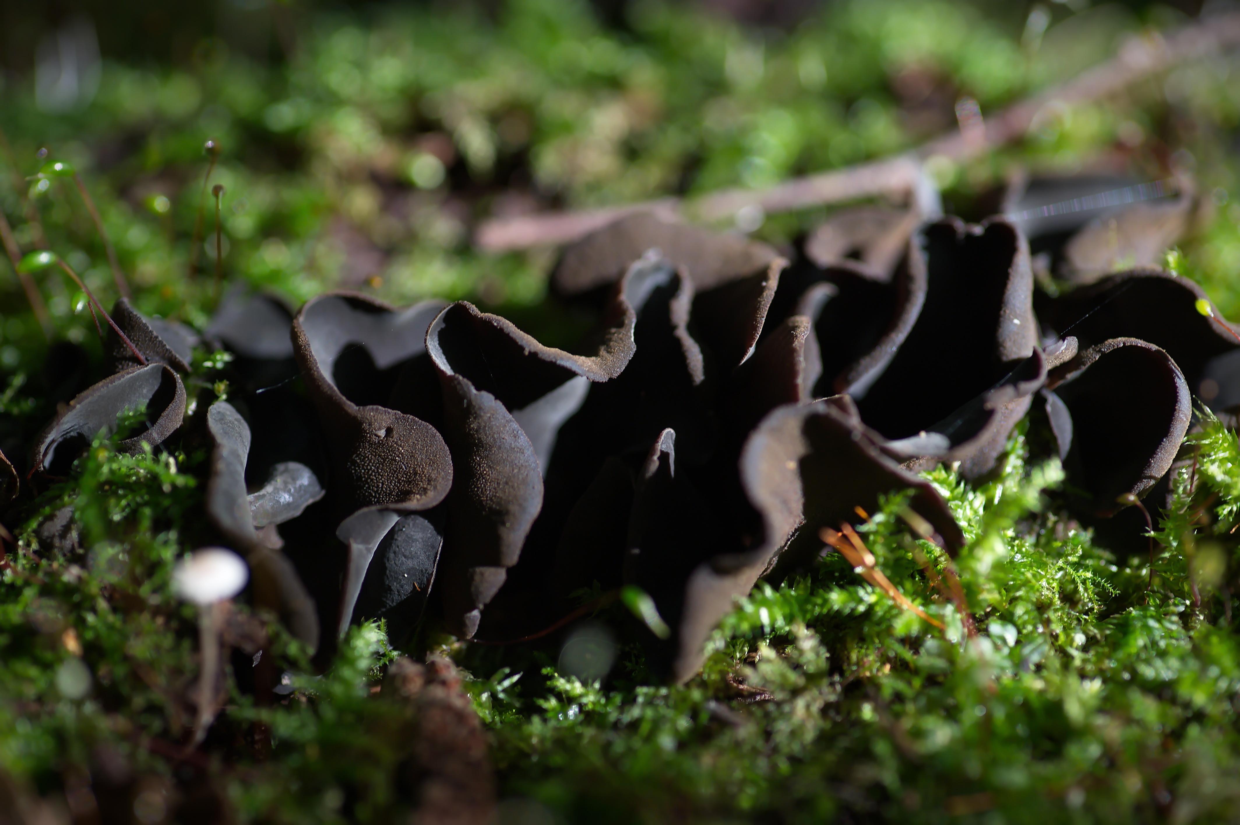 Валуевский лесопарк. Редчайший для наших мест гриб – Иономидотис. Фото: Алексей Захаринский