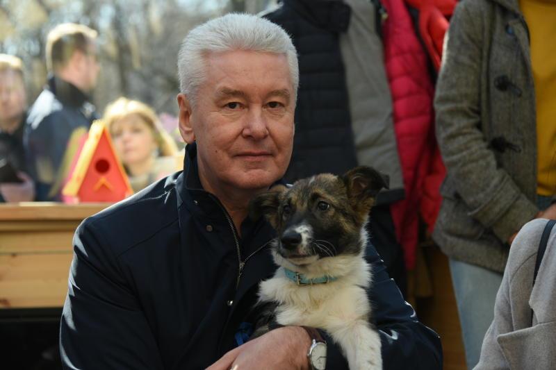 Сергей Собянин: Щенку вообще все равно, что я мэр