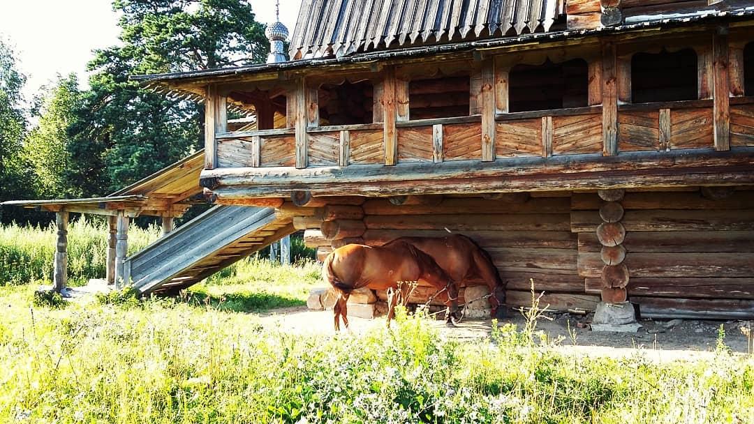 Лошади и старинный дом: участник фотоконкурса опубликовал снимок