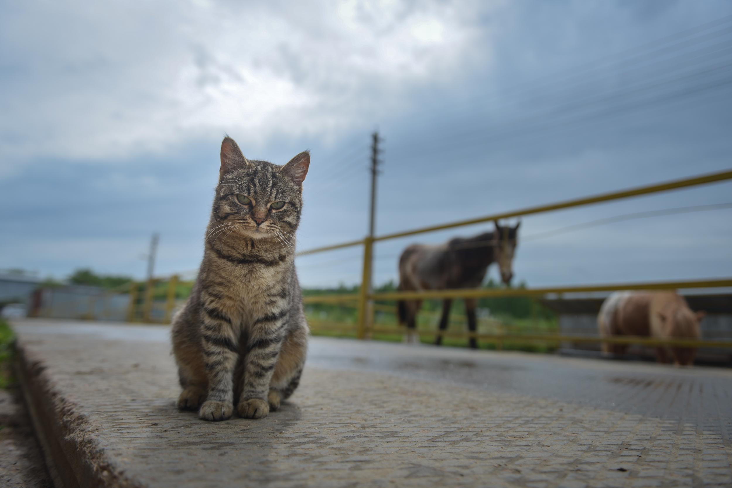 Количество беспризорных животных на территории Москвы сократилось