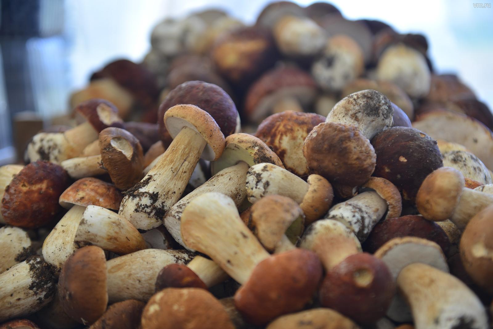 Жители столицы не смогут найти грибы до середины июля