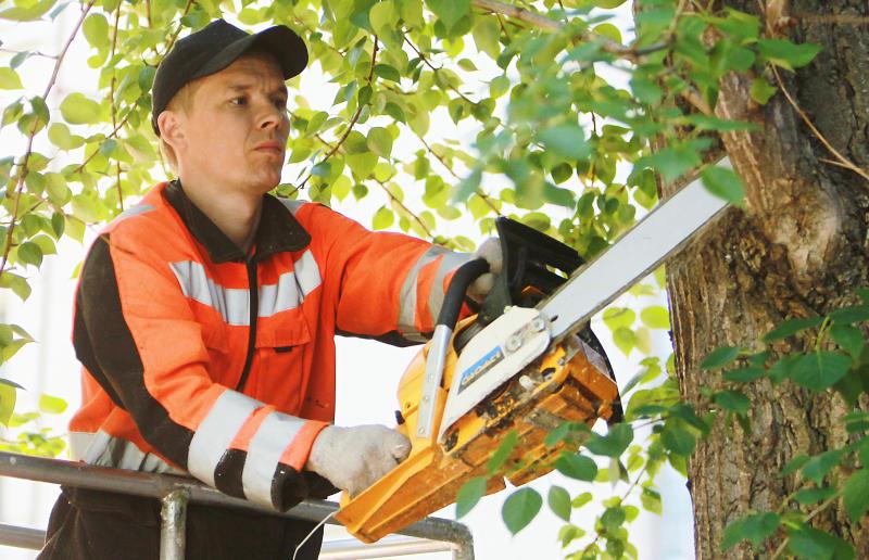 Специалисты провели обрезку деревьев в Рязановском
