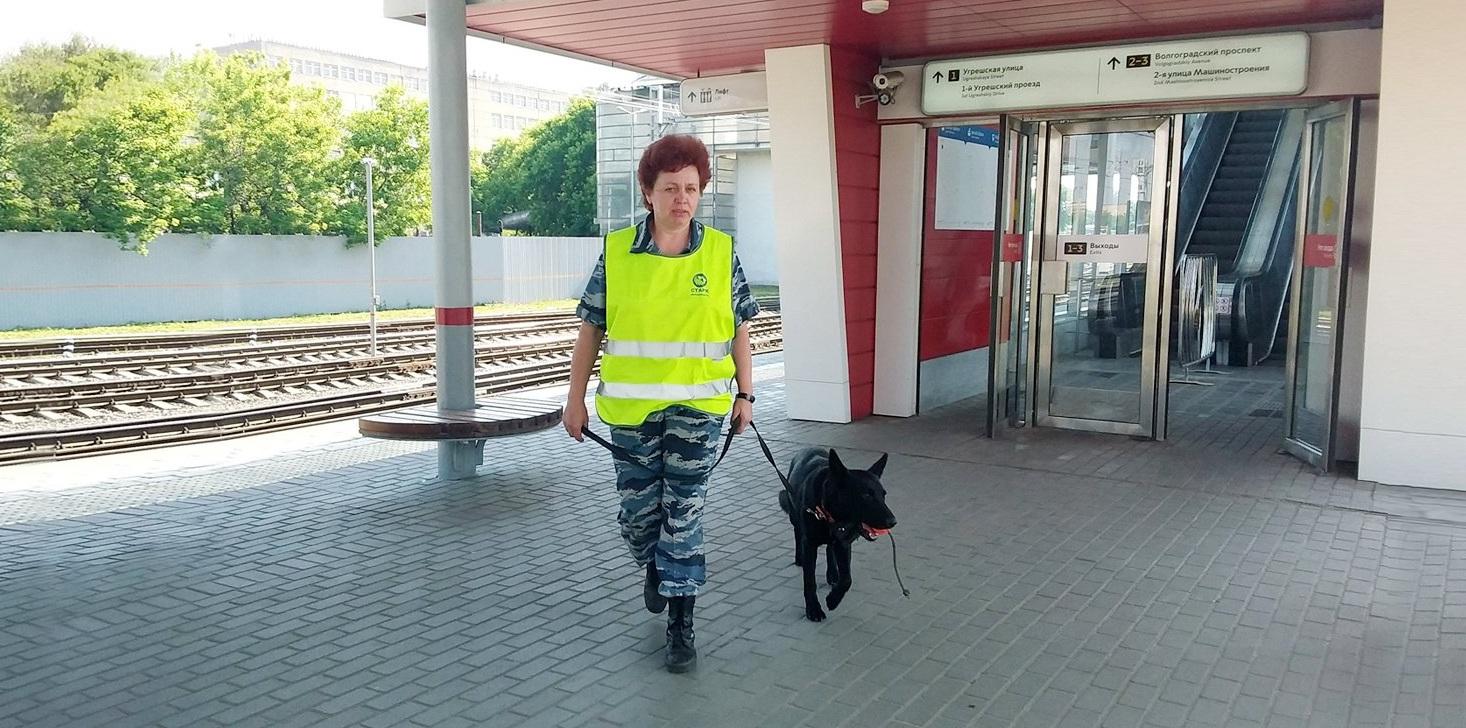Обученные собаки круглосуточно дежурят на станциях МЦК