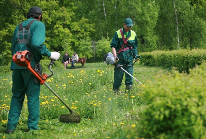 Специалисты покосили траву в Щербинке. Фото: архив, «Вечерняя москва»
