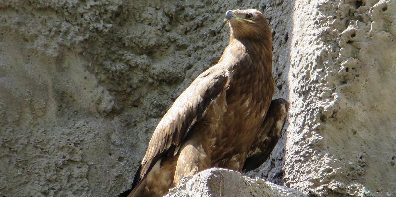 Принято считать, что орел — птица победителей. Фото: mos.ru