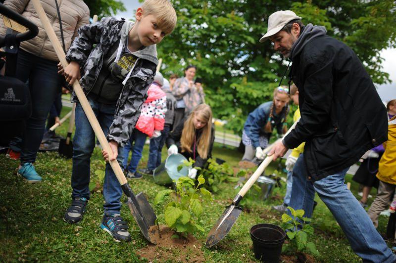 Около 35 деревьев высадили в Кокошкино