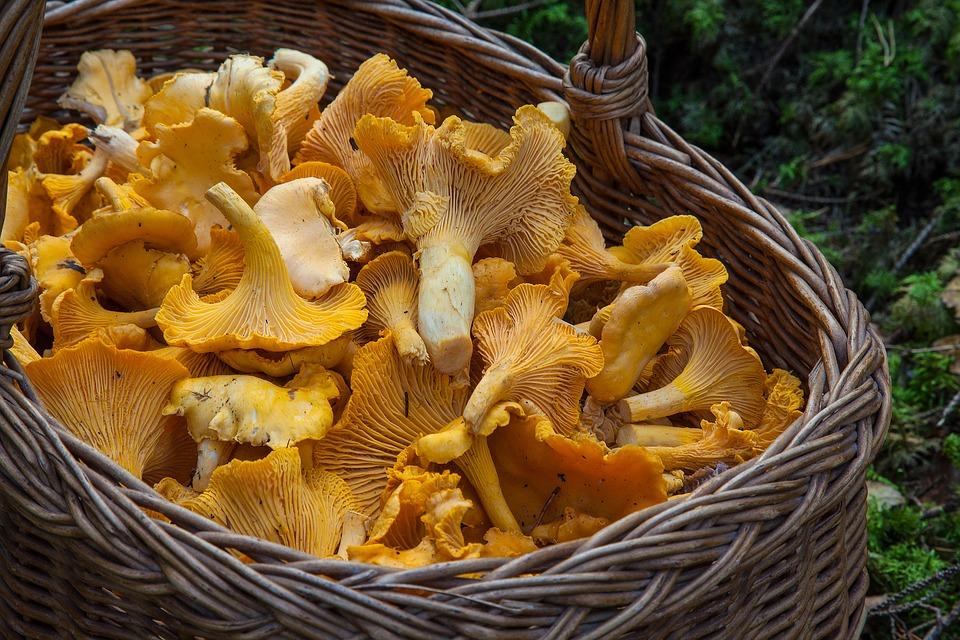 С грибами всегда нужно быть начеку. Фото: Pixabay