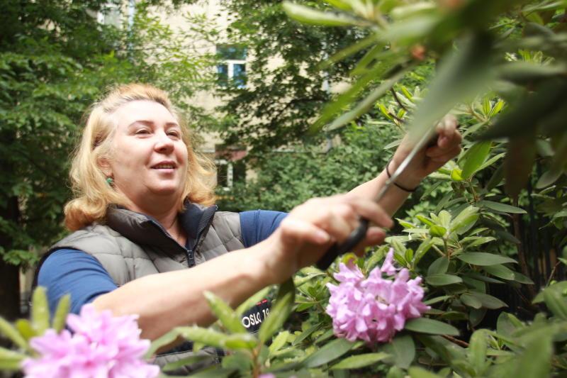 Несколько живых изгородей установили в Киевском