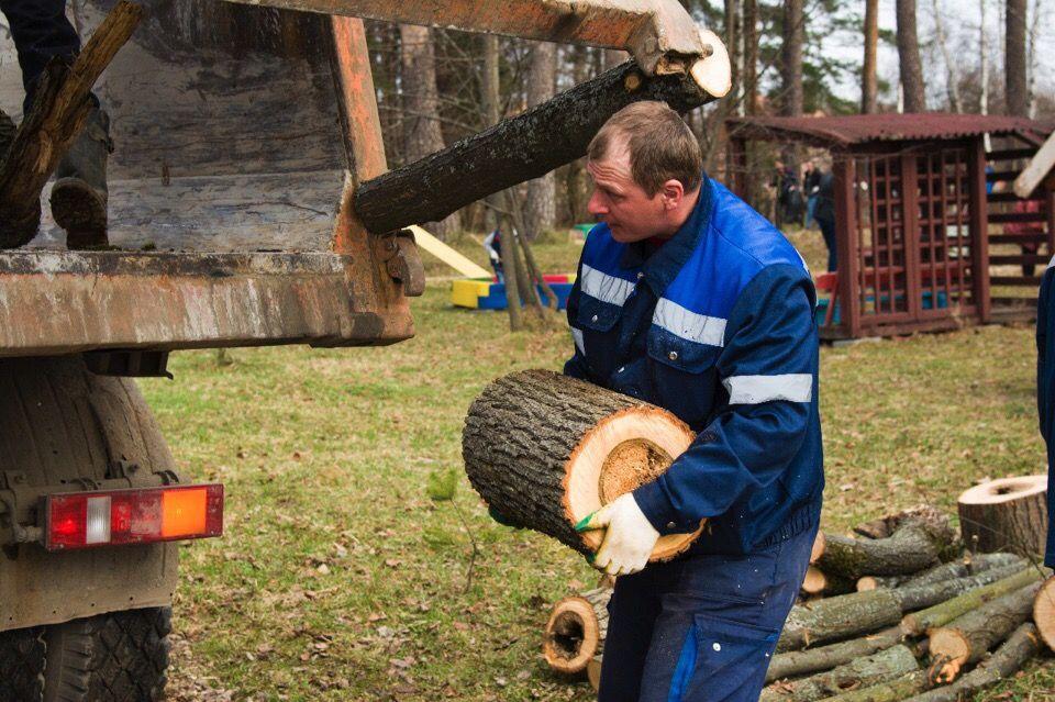 Специалисты из Внуковского избавились от сухостоев