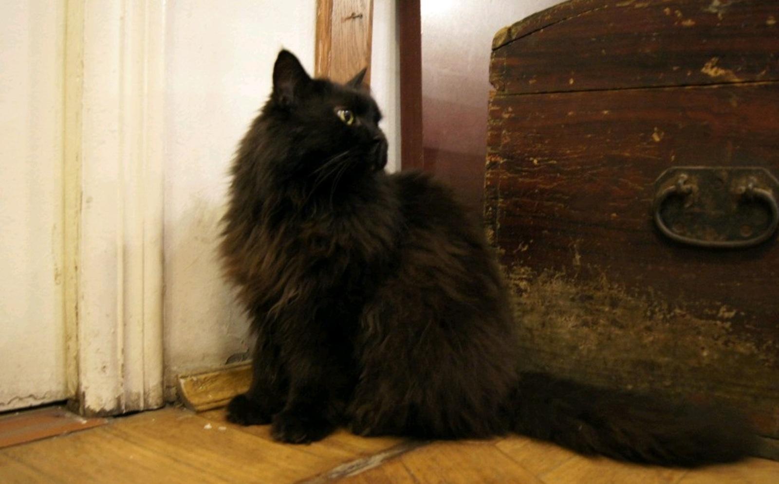 Музей-театр «Булгаковский дом» разыскивает украденного кота Бегемота