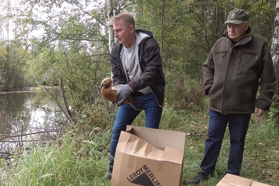 Спасенных птиц выпустили на волю в Новой Москве