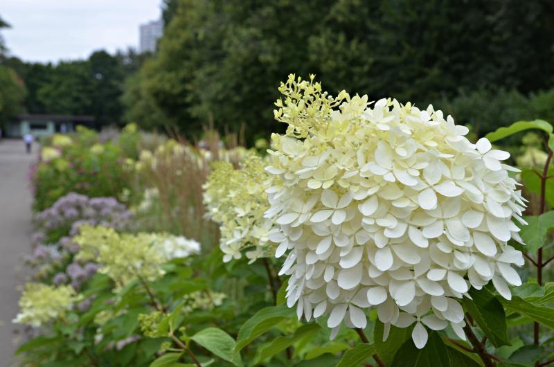 Летом в Новофедоровском высадили более десяти цветников