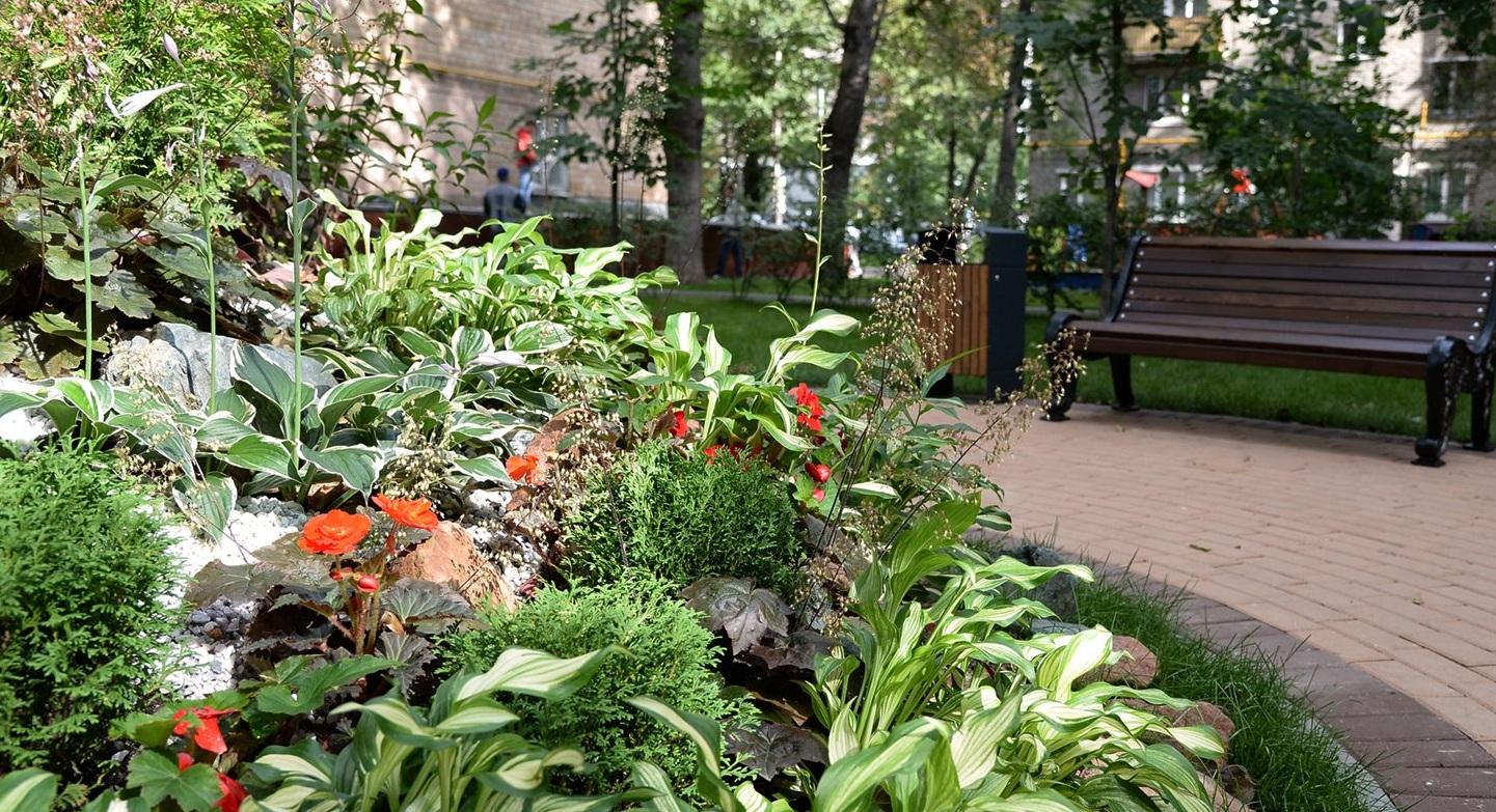 Москву украсили более 30 тысяч кустов хосты