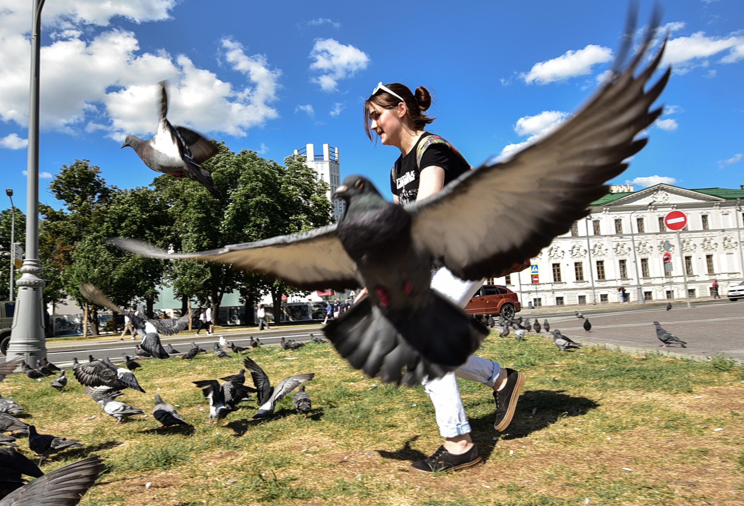 По количеству особей бесспорно лидирует сизый голубь. Фото: Пелагия Замятина