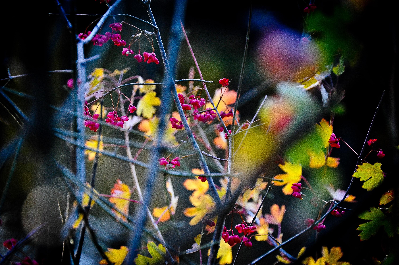 Осень возвращается в привычное состояние. Фото: Александр Казаков