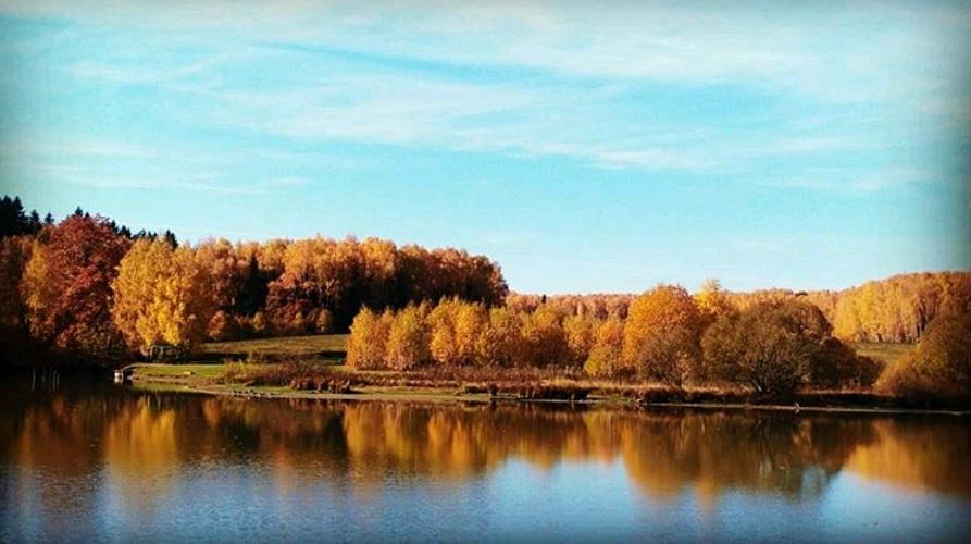 Берег осеннего леса: новый участник фотоконкурса определен. Фото: пользователь @yuliazanoza