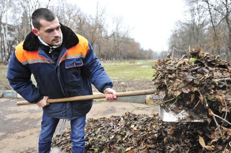 Жители столицы проголосовали за регулярную уборку листьев