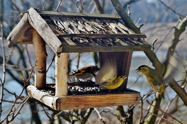 Орнитолог Москвы сообщил о создании карты птичьих кормовых зон