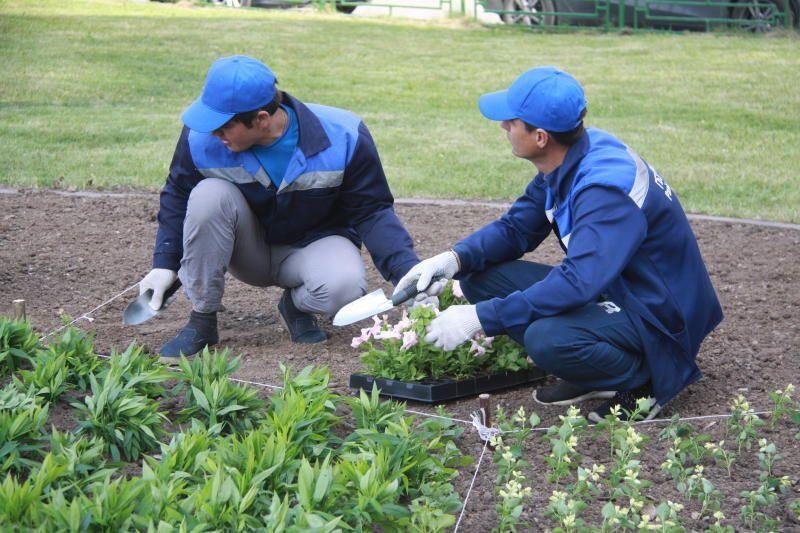Высадку тюльпанов произведут в Мосрентгене. Фото: архив, «Вечерняя Москва»