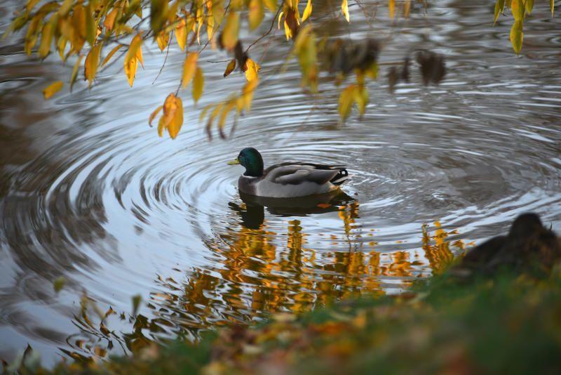 Рандеву у воды: территорию вокруг пруда благоустроят в поселении Вороновское