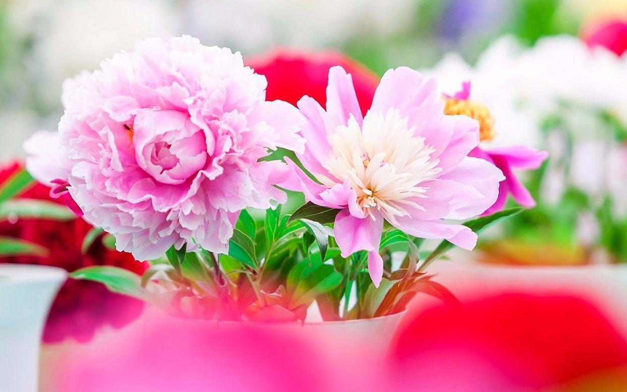 Самое главное слово: дети Первомайского подарят мамам «цветы»