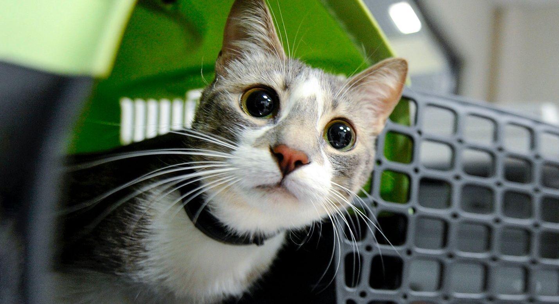 Москва запустила акцию ко Всемирному дню домашних животных