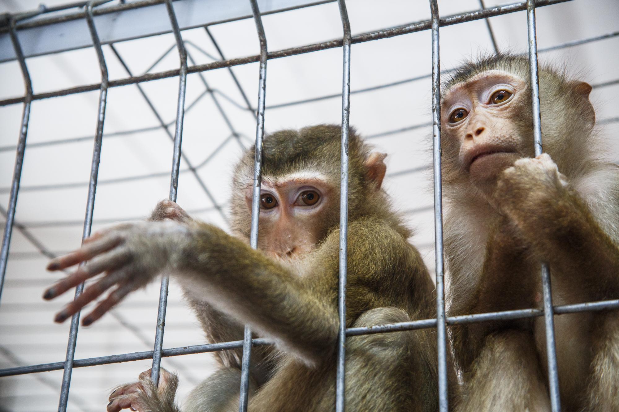 Серьезно обсудят и работу контактных зоопарков. Фото: Михаил Подобед, «Вечерняя Москва»