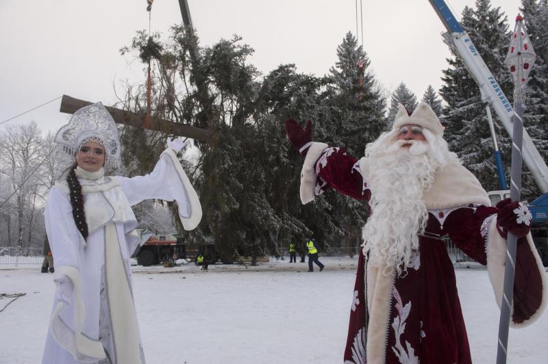 Главную новогоднюю елку страны срубят в воскресенье