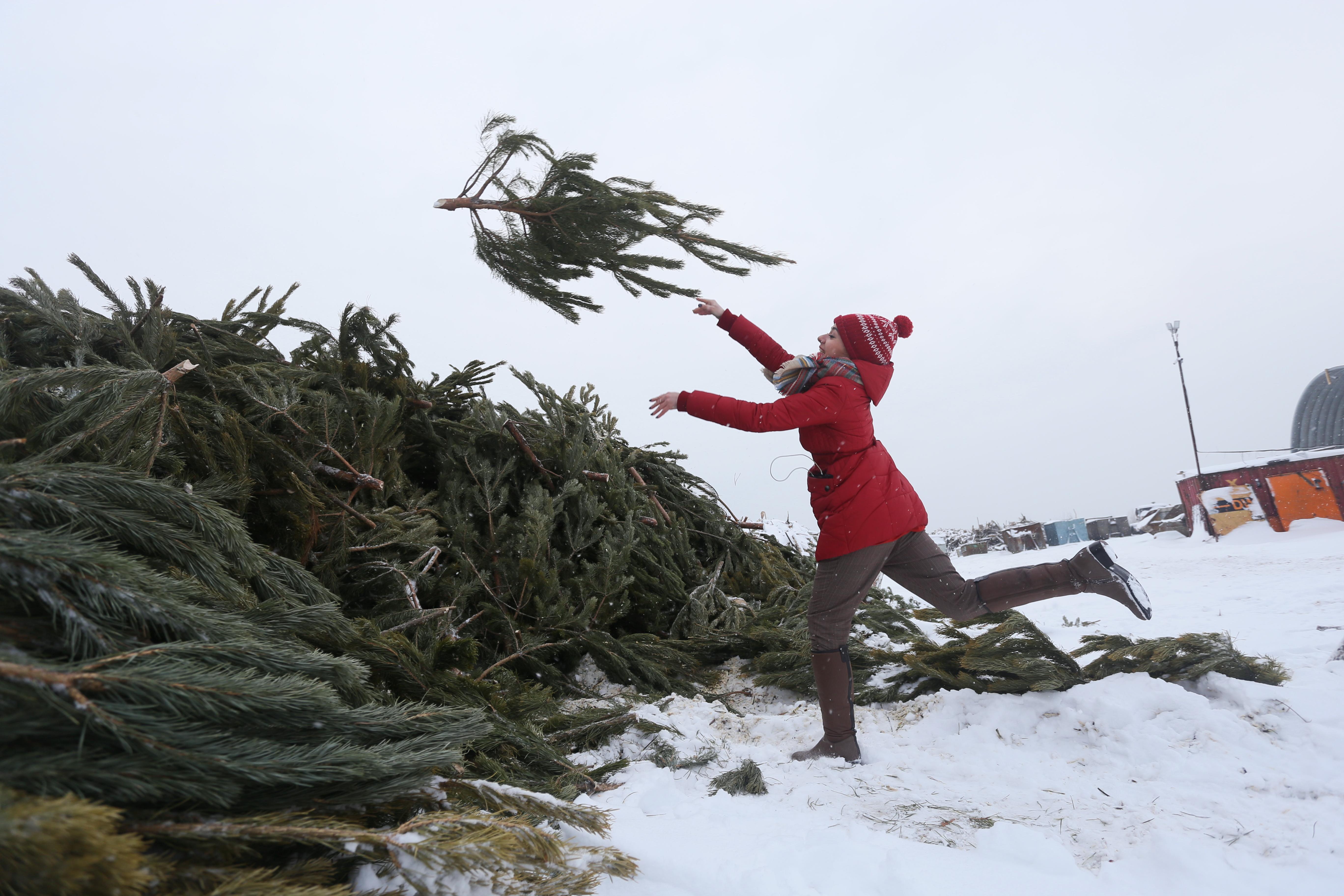 Москвичей пригласят в пункты сдачи елок после Нового года