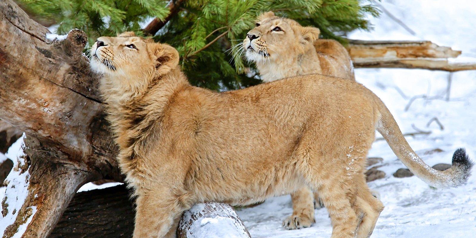 Московский зоопарк объявил 40-процентные скидки перед Новым годом
