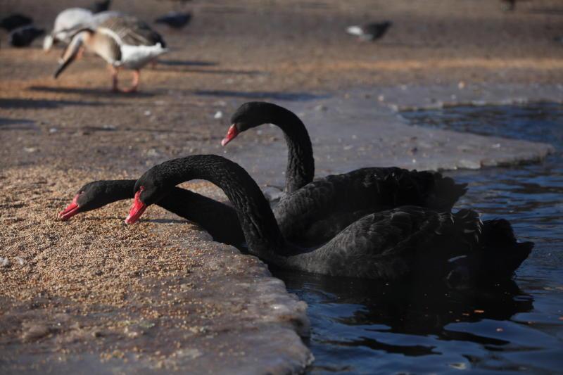 Зимой нужно помогать птицам подкормкой. Фото: Наталья Пьетра, «Вечерняя Москва»