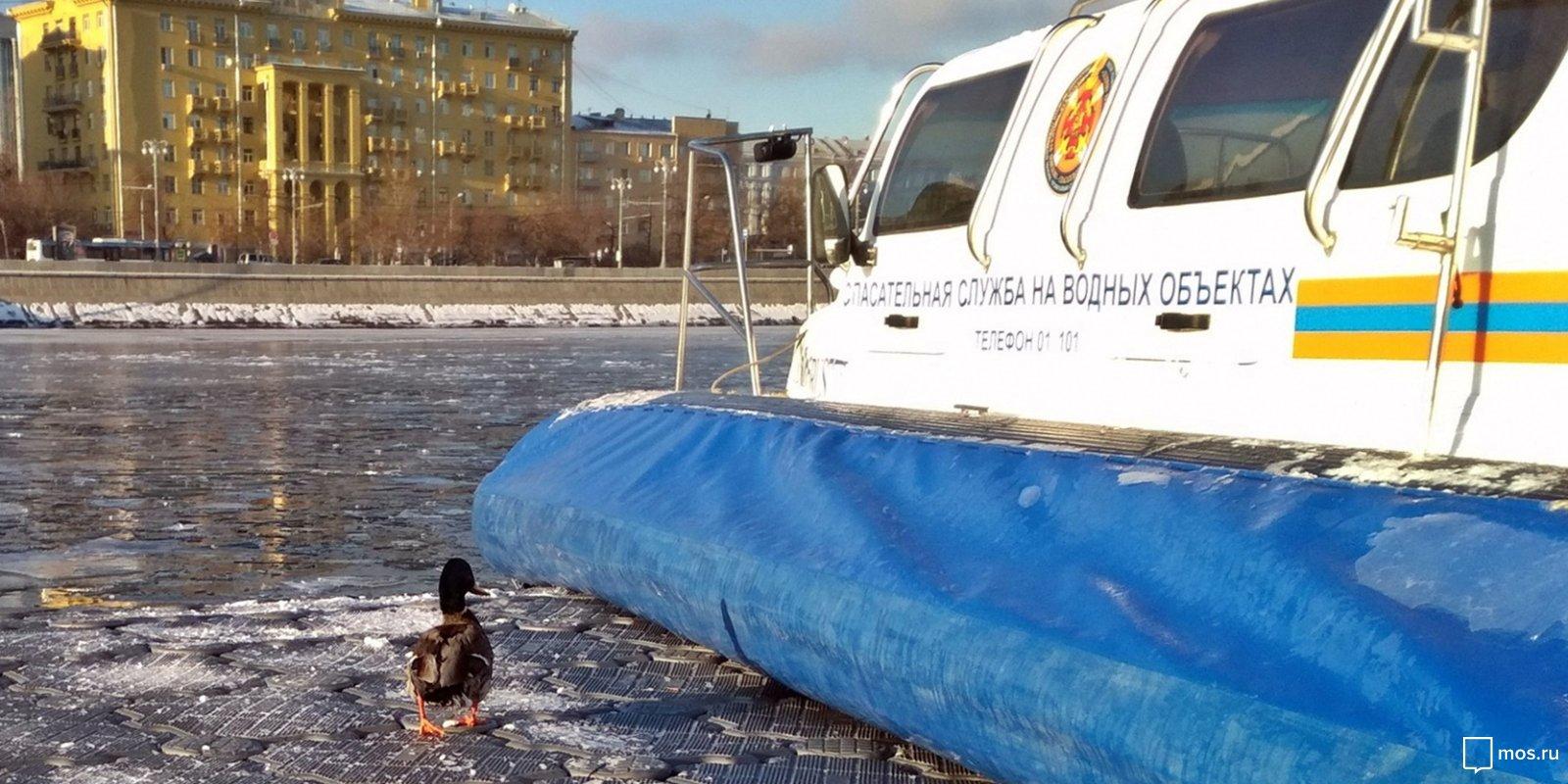 В центре Москвы спасли утку