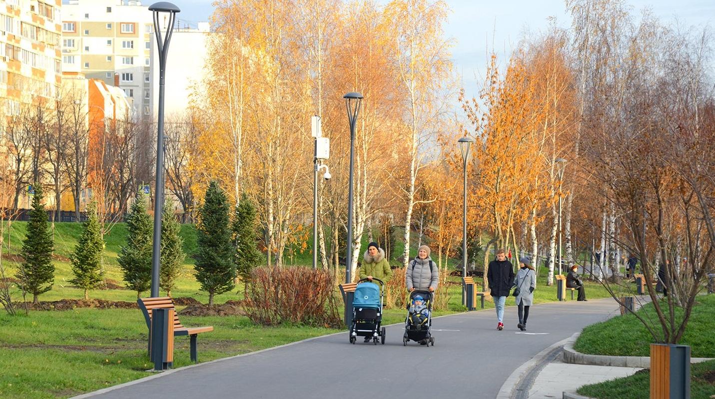 Почти 70 тысяч деревьев высадят в Новой Москве в 2019 году