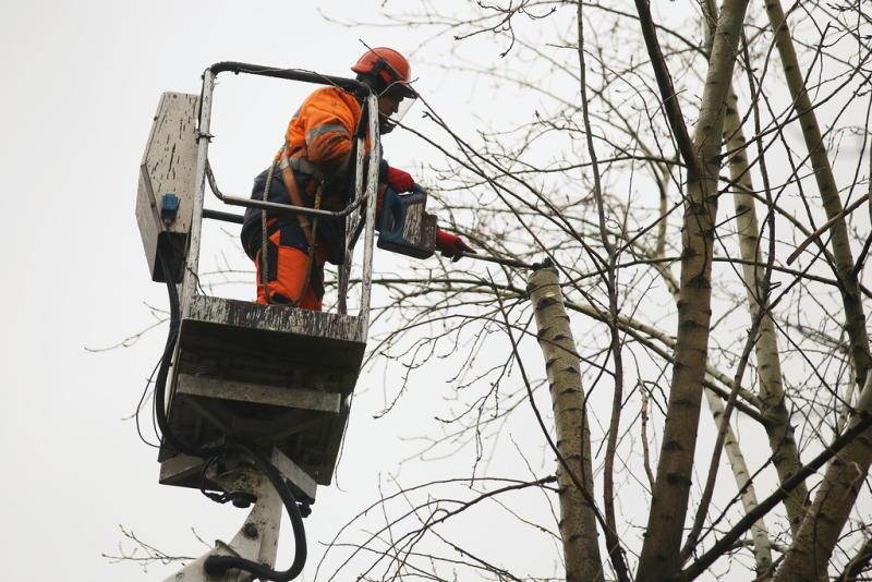 Деревья кронировали в селе Кленово. Антон Гердо, «Вечерняя Москва»