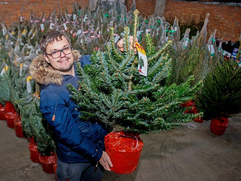 Специалисты проведут аукцион на право размещения елочных базаров в Новой Москве