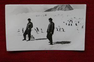 Участники экспедиции не один месяц провели среди снегов и королевских пингвинов. Фото: из личного архива