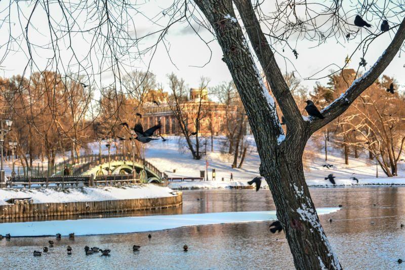 Переменчивая погода стала причиной птичьей депрессии в Москве