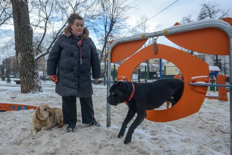 Внуковское получит два снаряда для дрессировки собак
