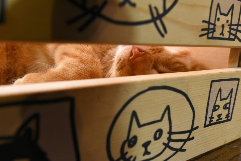 Зоозащитники хотят создать отдельный приют для кошек. Фото: Александр Кожохин