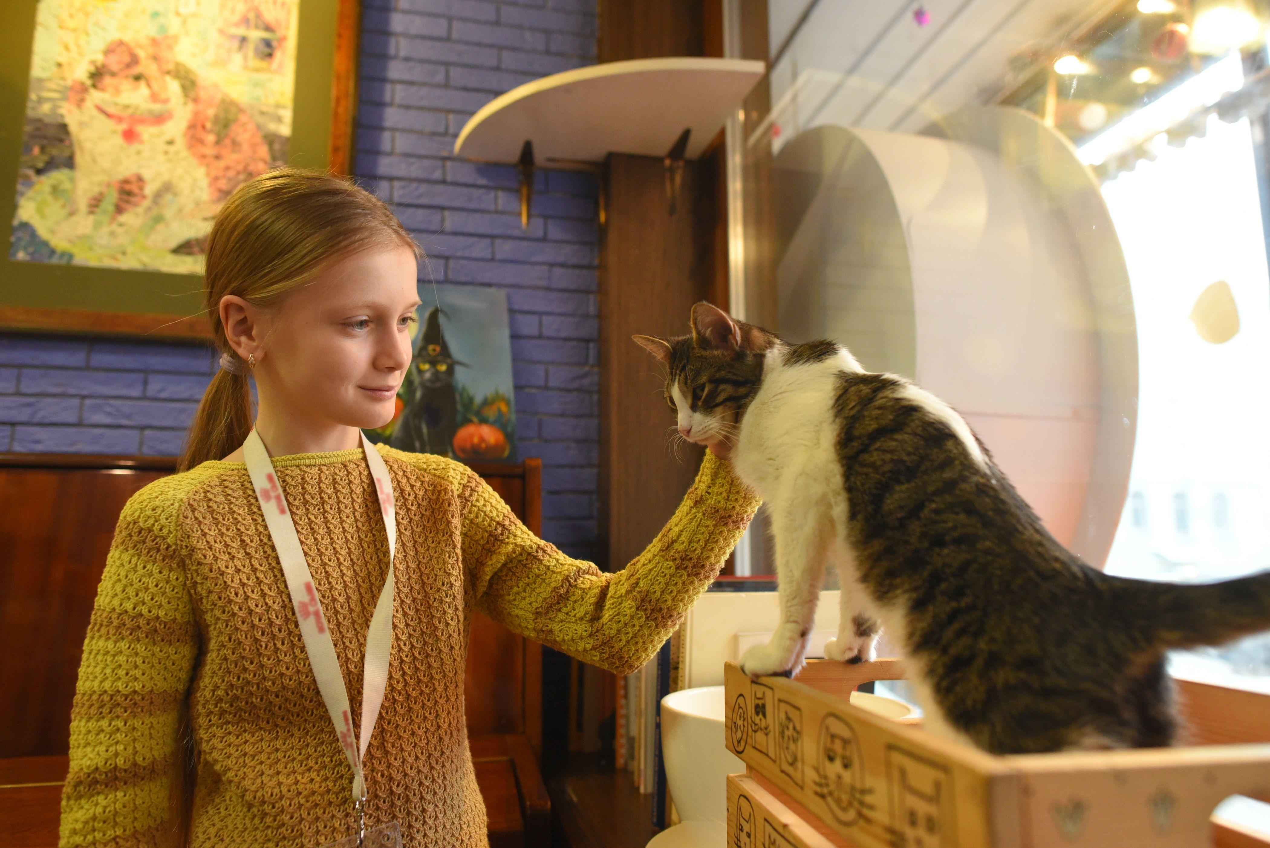 Ребятам из Вороновского расскажут о кошках