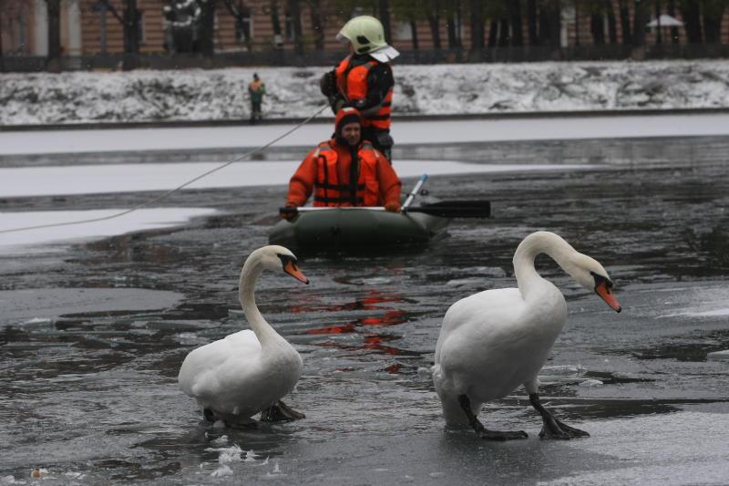 Спасатели Троицка вернули в мини-зоопарк улетевших лебедей