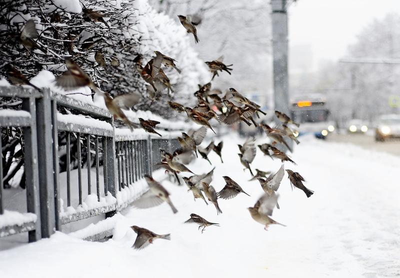 Жителям Москвы предложили создать съедобные картины для птиц