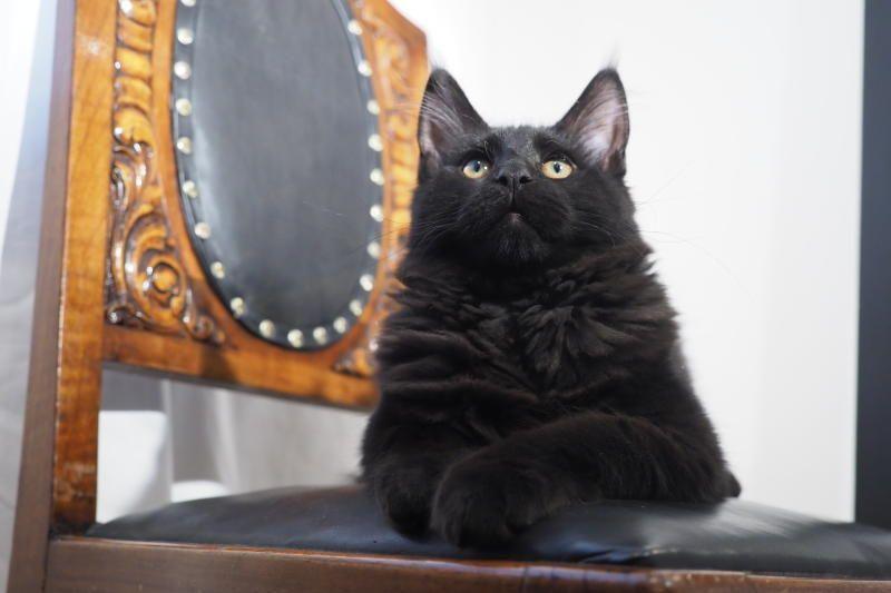 В России 1 марта отмечают День кошек. Фото: Антон Гердо