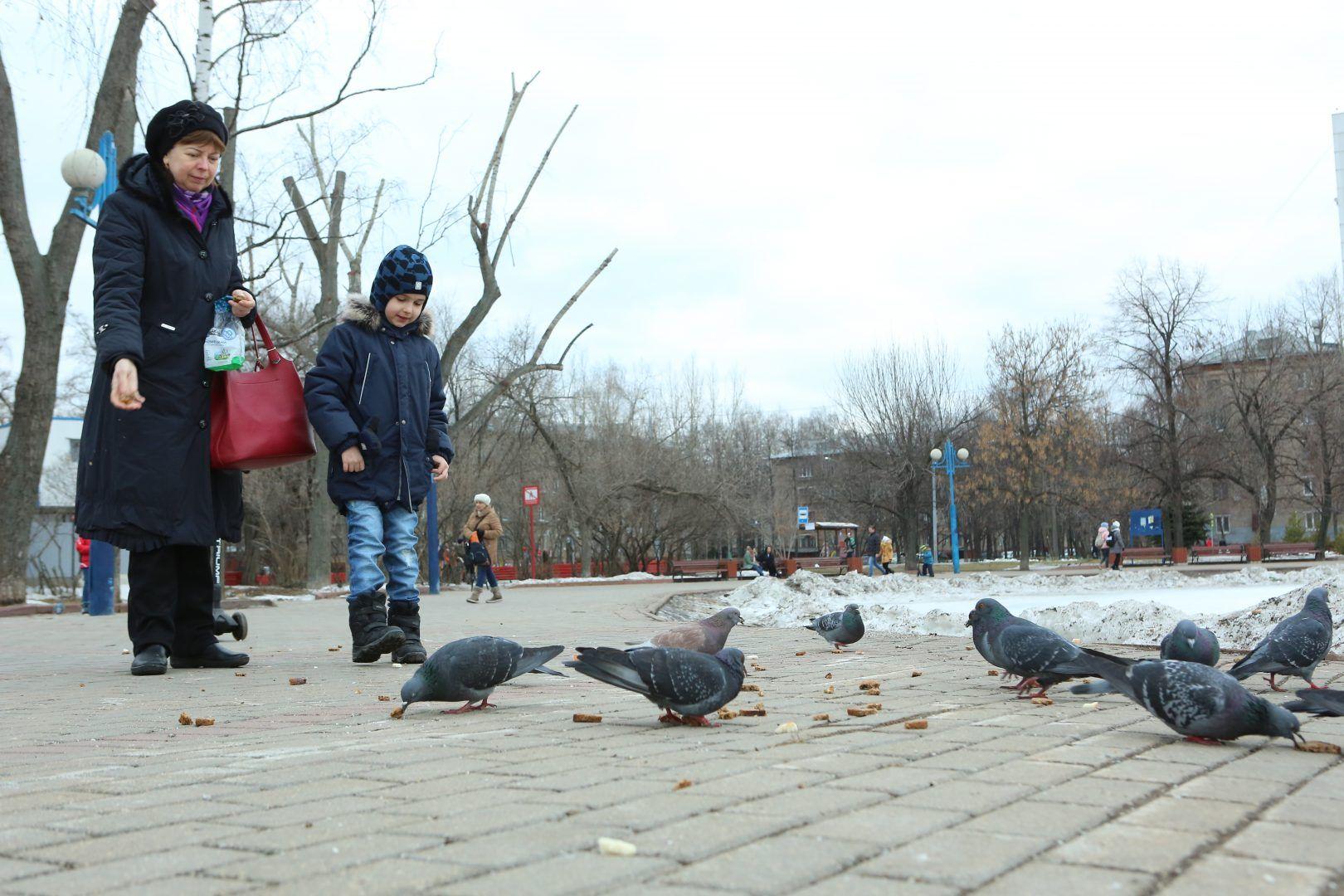 Дополнительные парки создадут в Новой Москве. Фото: Алексей Орлов, «Вечерняя Москва»